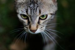 在阴影的猫 库存照片