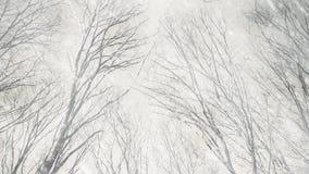 在阴沉的冬天森林的雪 影视素材