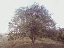 在阵营的树 免版税图库摄影