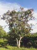 在阵营的树 免版税库存图片