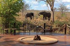 在阵营的Elefanten 免版税图库摄影