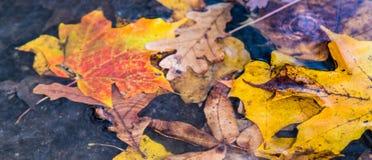 在阵雨期间,落入池水的精采地色的秋天叶子 免版税库存图片