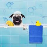 在阵雨的狗 免版税库存照片