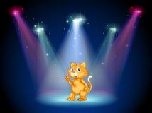 在阶段中间的一只猫在聚光灯下 免版税库存照片