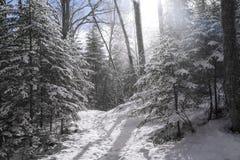 在阿地伦达山脉的冬天场面 库存图片