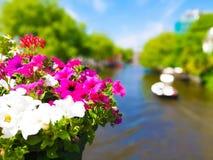 在阿姆斯特丹桥梁的喇叭花花 库存照片