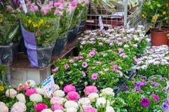 在阿姆斯特丹花市场上的丰足室内植物 荷兰 免版税库存图片