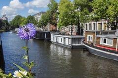 在阿姆斯特丹运河附近的一朵紫罗兰色花有小船的 免版税库存照片