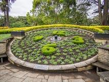 在阿尔伯特公园,奥克兰,新西兰的花卉时钟 免版税图库摄影