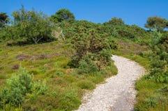 在阿尔内的欧石南丛生的荒野在多西特 库存照片