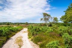 在阿尔内的欧石南丛生的荒野轨道在多西特 免版税库存图片