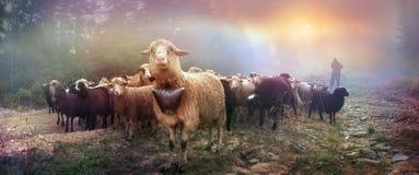 在阿尔卑斯成群的黎明 库存图片