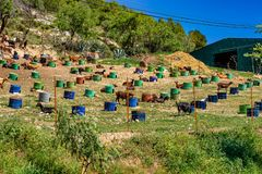 在阿尔戈多纳莱斯附近的山羊省的卡迪士,安大路西亚,西班牙 库存照片