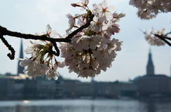 在阿尔斯坦的春天 免版税图库摄影