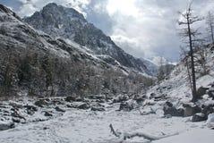 在阿尔泰山的春天 库存照片