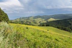 在阿尔泰山的美好的夏天风景 库存照片