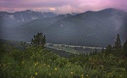 在阿尔泰的山的夏天早晨 免版税库存照片
