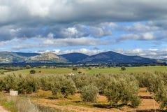 在阿尔瓦萨特,西班牙省的风景  库存照片