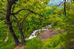 在阿布哈兹的山的绿色心情 图库摄影
