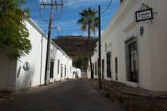 在阿拉莫斯的街道,地面蛇,墨西哥 图库摄影
