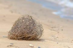 在阿曼海湾的含沙银行的风滚草 图库摄影