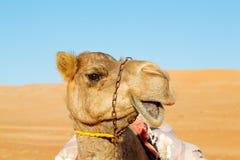 在阿曼空的处所沙漠释放 免版税库存照片