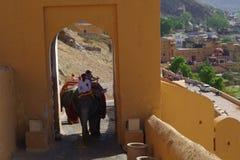 在阿梅尔堡垒拉贾斯坦的大象 免版税库存照片