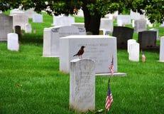 阿灵顿国家公墓,弗吉尼亚,美国 库存照片