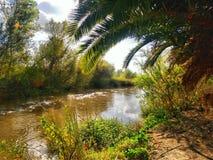 在阿纳海姆沼泽地附近的圣塔安那河 库存图片