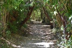 在阿贝尔・塔斯曼沿海轨道的自然隧道 库存图片