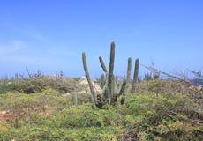 在阿鲁巴的自然风景 库存照片