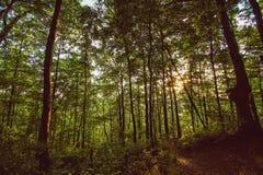 在阿巴拉契亚足迹的日落 库存图片
