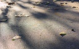 在陆运的干燥叶子 免版税库存照片