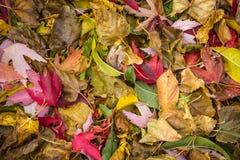 在陆运的秋天叶子 库存照片