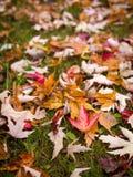 在陆运的秋天叶子 免版税库存图片