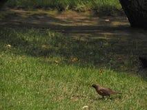 在陆运的鸟 图库摄影