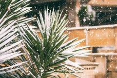 在降雪下的棕榈树 免版税库存照片