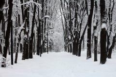 在降雪以后的积雪的公园 库存照片