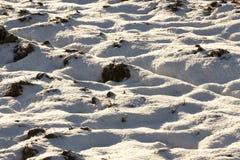 在降雪以后的雪 库存照片