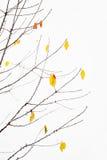在降雪期间的秋叶 图库摄影