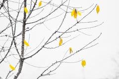 在降雪期间的秋叶 免版税库存照片