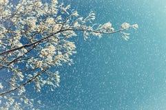 在降雪的冬天自然 冬天树的冬天冷淡的树枝反对冬天天空的 库存图片