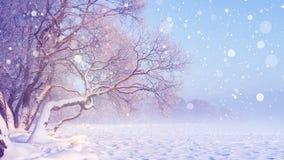 在降雪的冬天风景 抽象空白背景圣诞节黑暗的装饰设计模式红色的星形 冷淡的结构树 场面多雪的冬天 是愉快的童话完全地听到i,如果图象感谢使用冬天会您的地方 库存图片