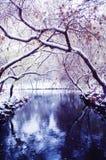 在降雪的河的树曲拱 库存图片