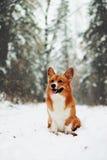 在降雪的逗人喜爱的小狗 库存图片