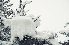 在降雪以后的积雪的树 免版税库存图片