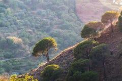 在陡峭的小山的树 免版税库存照片