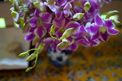 在陶瓷花瓶的新同色而浓淡不同的颜色,紫色和白色,发芽的和开花的兰花花的布置 库存照片