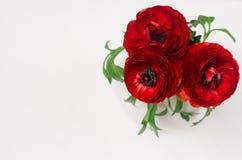 在陶瓷花瓶顶视图的豪华深红三朵花在白色木背景 假日事件的浪漫装饰 免版税图库摄影
