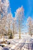 在随风飘飞的雪的极性天猫座 库存照片